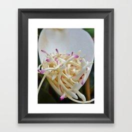 Magnolia Flower  Framed Art Print
