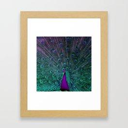 BLOOMING PEACOCK Framed Art Print