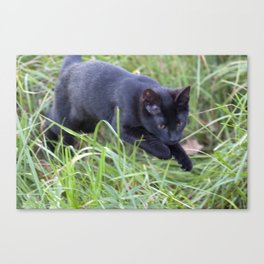 Hunting Cat Canvas Print