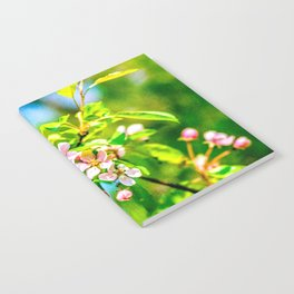 Apple blossoms in spring Notebook