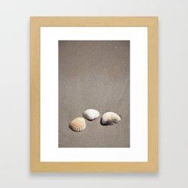 Three Seashells Framed Art Print