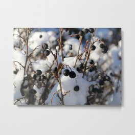 Black Currant in Snow Metal Print
