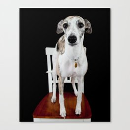 Nosy Whippet Canvas Print