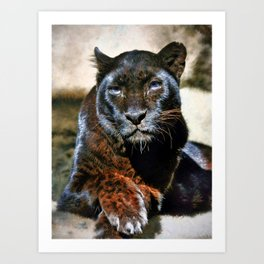 The Black Leopard Art Print