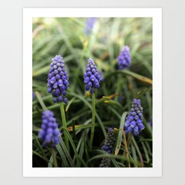 bluebells beauty Art Print