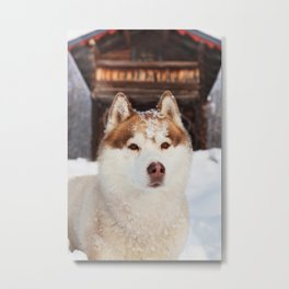 Ginger in the snow Metal Print