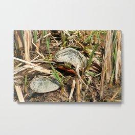 Pair of Painted Turtles Warming in the Sun Metal Print