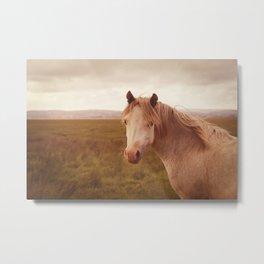 Vintage wild horse Metal Print