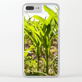 corn field close up Clear iPhone Case