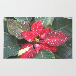 Raindrops On A Poinsettia Christmas Flower Rug