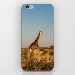 Giraffe on a Morning Walk iPhone Skin