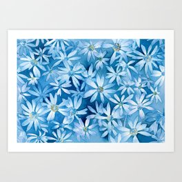 Blue Shasta Daisies Art Print