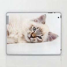 Blue Eyed Kitty Cat Laptop & iPad Skin