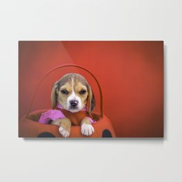Beagle Puppy Wearing a Pink and Red Dress in a Ladybug Basket against a Red Background Metal Print