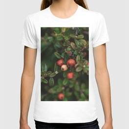 Chinese Firethorn Plant Printable Wall Art | Floral Flower Botanical Nature Outdoors Macro Photography Print T-shirt
