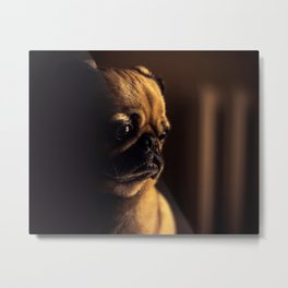 Cute Pug Dog Metal Print