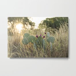 Cactus in Texas Hillcountry Metal Print