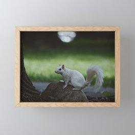 Albino Squirrel Framed Mini Art Print