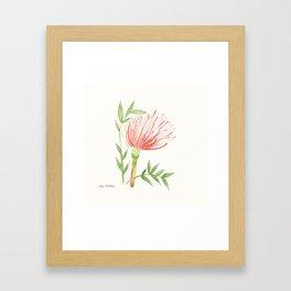Pin Cushion Flower Framed Art Print