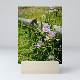 Wild Daisies Mini Art Print