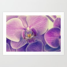 violet orchid Art Print