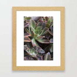 Succulents in Purple & Green Framed Art Print