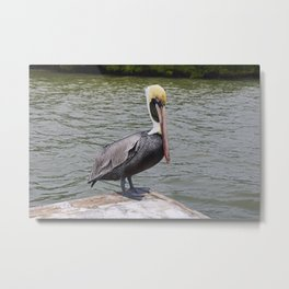 The Overconfident Gent Metal Print