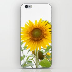 Sunflower #1 #decor #art #society6 iPhone & iPod Skin