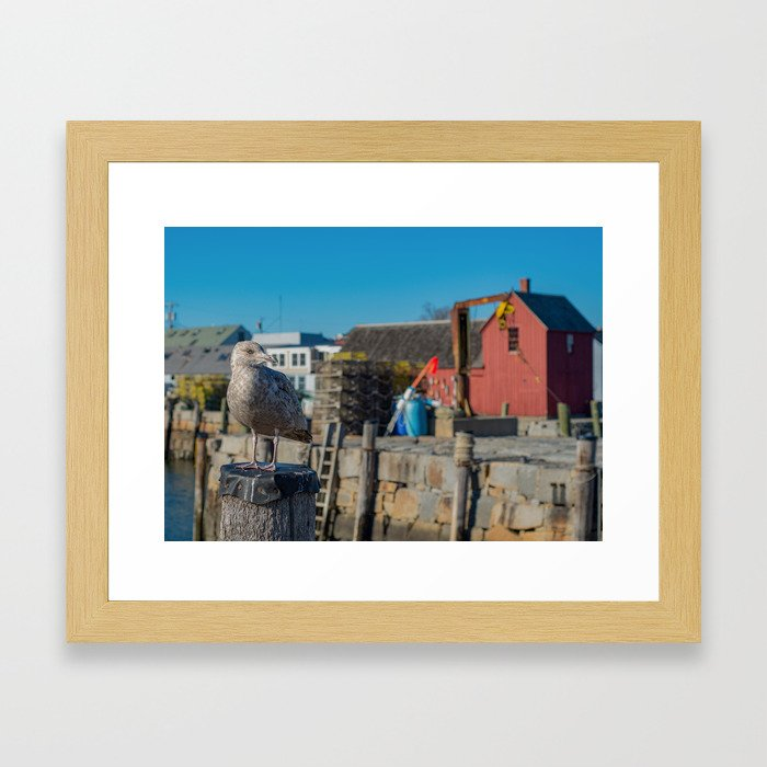 Seagull Rockport Harbor Framed Art Print
