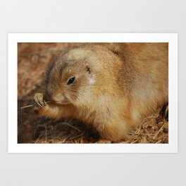 Prairie Dog Portrait Art Print