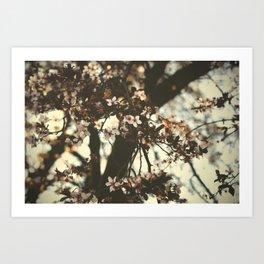 Spring daze Art Print