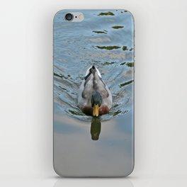 Mallard duck swimming in a turquoise lake 2 iPhone Skin