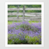lavender Art Prints featuring Lavender by Scherer Art