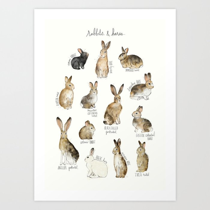 Discover the motif RABBITS & HARES by Amy Hamilton as a print at TOPPOSTER