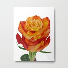 Orange Rose I Drawing Metal Print
