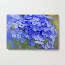 Summer garden blues - macro floral phtography Metal Print