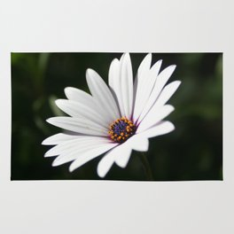Daisy flower blooming close-up Rug