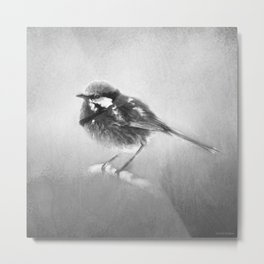 Splendid Fairy Wren In Black And White Metal Print