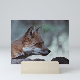 Red Fox in Arizona Mini Art Print