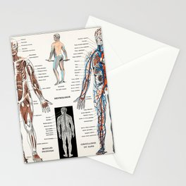 An antique  of a human nervous system and muscular system (1900) by Larousse  Auge and Claude Stationery Cards