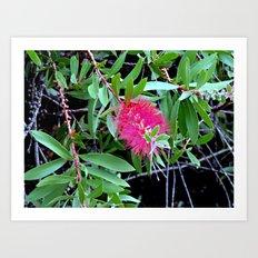 Armidale41415 Art Print