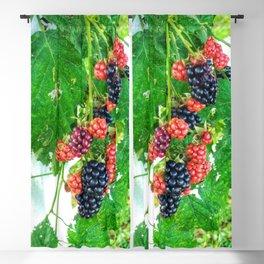 Blackberries Blackout Curtain