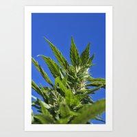 marijuana Art Prints featuring Marijuana by johng