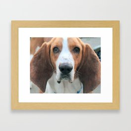 Alert! Basset Hound Framed Art Print