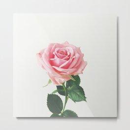 Spring Rose Metal Print