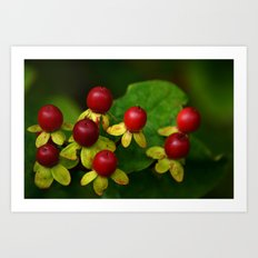 Berry Good! Art Print