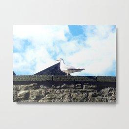 Scottish seagull Metal Print