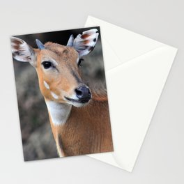 Persian Gazelle Stationery Cards