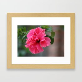 Hibiscus in Mexico Framed Art Print