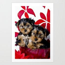 Snuggling Christmas Yorkie Puppies Art Print